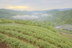 Tea plantation fields at dawn with morning fog in the distant valley, in Pingling, Taipei, Taiwan Royalty Free Stock Images