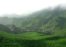 Tea Plantation with fog Stock Images