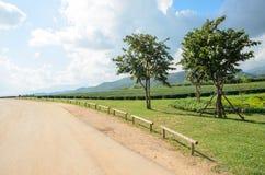 Tea plantation garden at Singha Park,Chiang Rai Thailand Stock Images