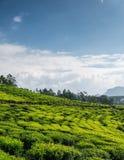 Tea plantation in highland Stock Images