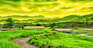 Tea plantation on the hill Stock Photos