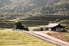 Tea plantation on the hill with a vintage cottage Stock Image