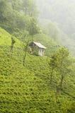 Tea plantation on hillside. Scenic view of green tea plantation on steep hillside with small building, East Turkey Stock Photos