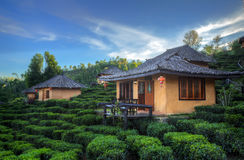 Tea Plantation and hut in Ban Rak Thai Royalty Free Stock Image