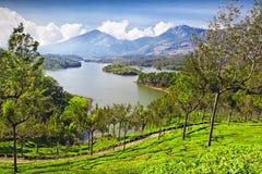 Tea Plantation In Munnar Royalty Free Stock Images