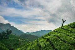 Tea plantation. A tea plantation in India Royalty Free Stock Photo