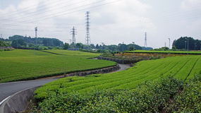 Tea plantation in Japan Royalty Free Stock Images