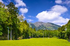 Tea Plantation in Japan Stock Photo