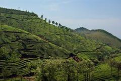 Tea plantation of Kerala, South India Stock Photography