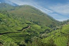 Tea plantation of Kerala, South India Stock Images