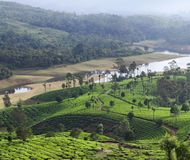 Tea plantation in Kerala, South India Stock Photos