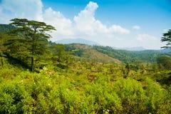Tea plantation landscape Royalty Free Stock Image