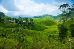 Tea plantation landscape. In Sri Lanka Royalty Free Stock Images