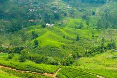Tea plantation landscape. In Sri Lanka Royalty Free Stock Photos
