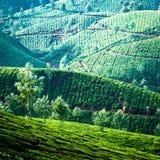 Tea plantation landscape. Munnar, Kerala, India Royalty Free Stock Images
