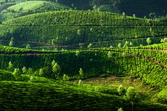 Tea plantation landscape. Munnar, Kerala, India Royalty Free Stock Photography