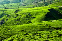 Tea plantation landscape. Munnar, Kerala, India Stock Photos