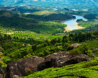 Tea plantation landscape panorama. India Royalty Free Stock Photos