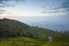 Tea plantation landscape sunrise Stock Photos