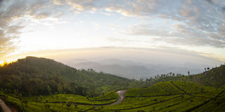 Tea plantation landscape sunrise Royalty Free Stock Photo