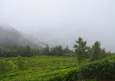 Tea Plantation and Misty Mountains - Green Landscape - Natural Background Stock Photos