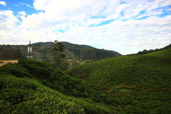 Tea plantation is in a mountain district .Srilanka. Royalty Free Stock Photos