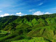 Tea plantation. Moutain and tea plantation in Malasia royalty free stock photos