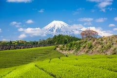 Tea Plantation and Mt. Fuji Royalty Free Stock Images