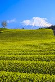 Tea plantation and Mt. Fuji Stock Images