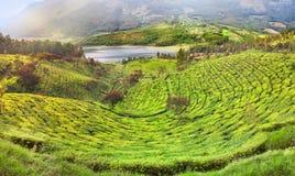 Tea Plantation in Munnar, India Stock Images