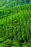Tea plantation in Munnar, Kerala, India Royalty Free Stock Photography
