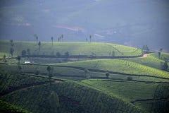 Tea plantation, munnar stock image