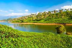 Tea plantation nature background landscape. Amazing landscape view of tea plantation and lake nature background stock images