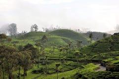 Tea plantation nature landscape in Sri Lanka. A landscape with tea plantations in the hill country of Sri Lanka Stock Photography