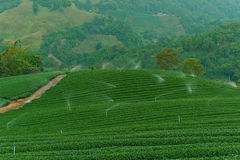 Tea plantation, Nature, Plant, Leaf, Sprinklers Stock Image