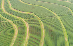 Tea plantation in north of Thailand. Aerial view from flying  Stock Photo