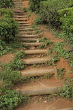 Tea Plantation Path Stock Photo