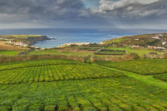 Tea plantation Porto Formoso Royalty Free Stock Photo