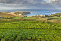 Tea plantation Porto Formoso Stock Image