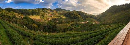 Tea plantation 2000 `s. At Doi Ang Khang in Chiang Mai, Thailand Royalty Free Stock Photo