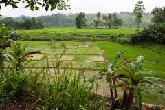 Tea plantation sri lanka Royalty Free Stock Image
