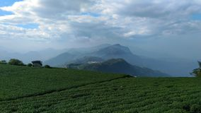Tea plantation in taiwan Royalty Free Stock Images