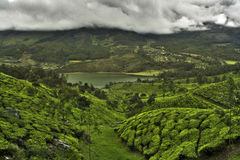 Tea plantation valley Stock Images