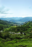 Tea Plantation Valley Landscape. Beautiful landscape of tea plantation in Cameron Highlands, Malaysia royalty free stock photo