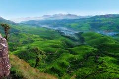 Tea plantation valley at sunrise Royalty Free Stock Photos