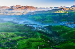 Tea plantation valley at sunrise Stock Photo