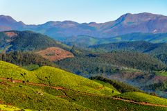 Tea plantation valley at sunrise in Munnar Royalty Free Stock Photo
