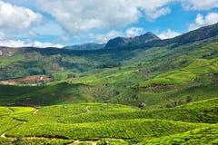 Tea plantations Royalty Free Stock Photos