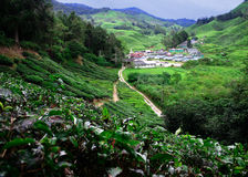 Tea Plantations. At Cameron Highlands Malaysia royalty free stock photos