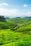 Tea plantations Stock Photography